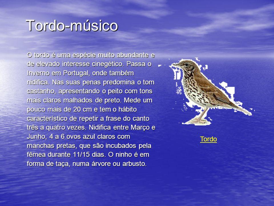 Tordo-músico O tordo é uma espécie muito abundante e de elevado interesse cinegético.