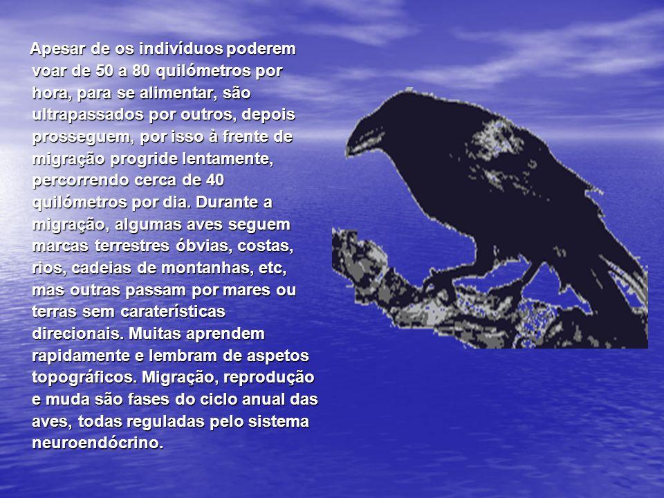 As aves migradoras orientam-se sobretudo pelo sol (migração diurna), pelas estrelas (migração nocturna) e pelo campo magnético terrestre (que inclui os dois tipos de migrações citados).