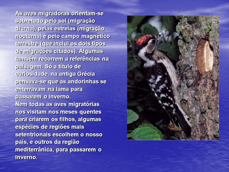 Gaio Uma plumagem colorida, onde se destacam o azul e branco das asas que contrastam com o preto dominante, e uns gritos ásperos - kaaa - identificam esta grande ave que chega a medir quase 40 cm.
