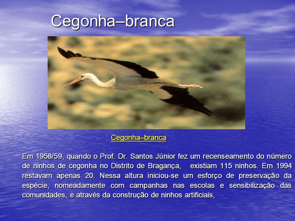 até porque um dos grandes problemas com que a cegonha se debateu foi o desaparecimento dos negrilhos, o principal suporte dos seus ninhos, devido à grafiose dos ulmeiros.