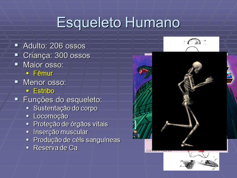 Esqueleto Humano  Adulto: 206 ossos  Criança: 300 ossos  Maior osso:  Fêmur  Menor osso:  Estribo  Funções do esqueleto:  Sustentação do corpo  Locomoção  Proteção de órgãos vitais  Inserção muscular  Produção de céls sanguíneas  Reserva de Ca