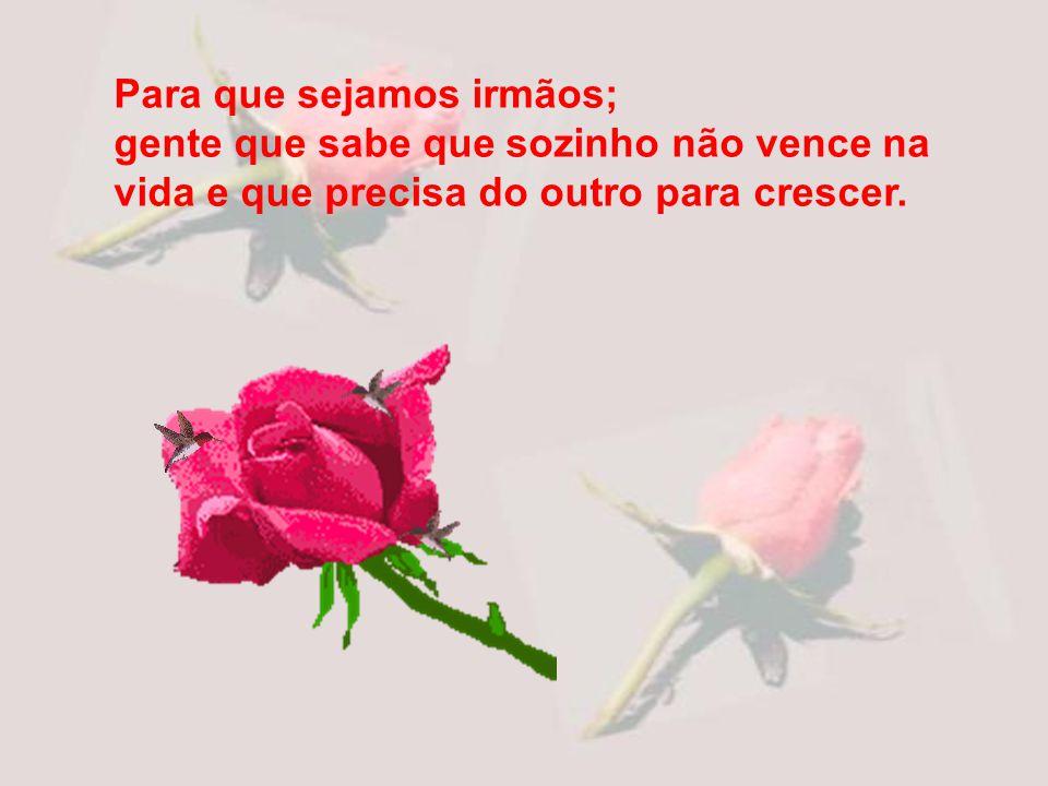 Para que você não esteja só que tenha alegria e coragem de seguir jornada. A rosa que hoje lhe trago é minha amizade.