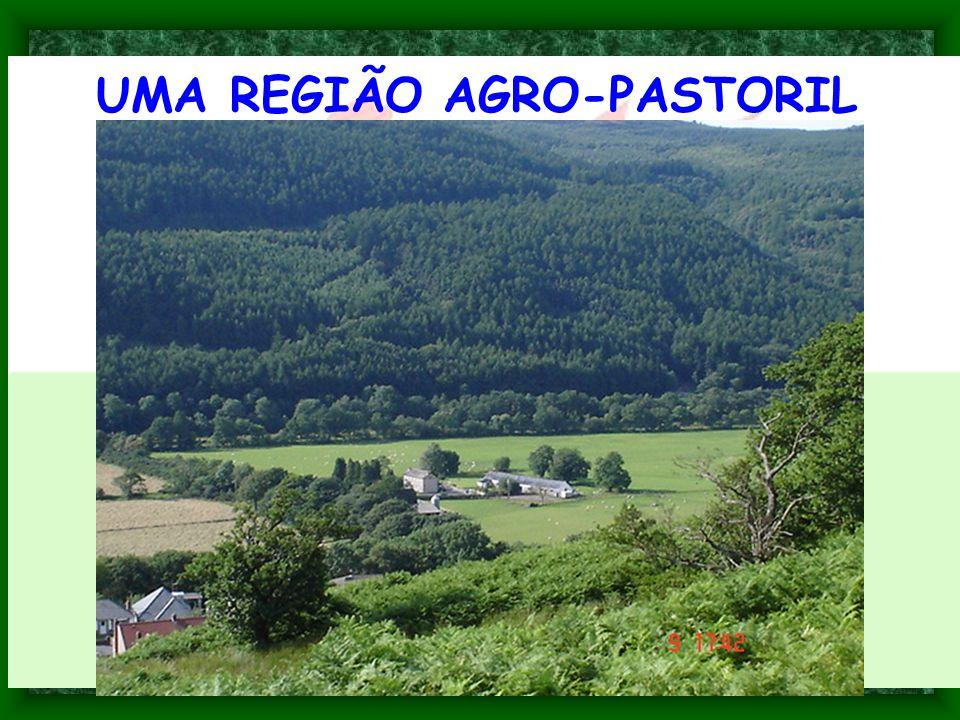 UMA REGIÃO AGRO-PASTORIL