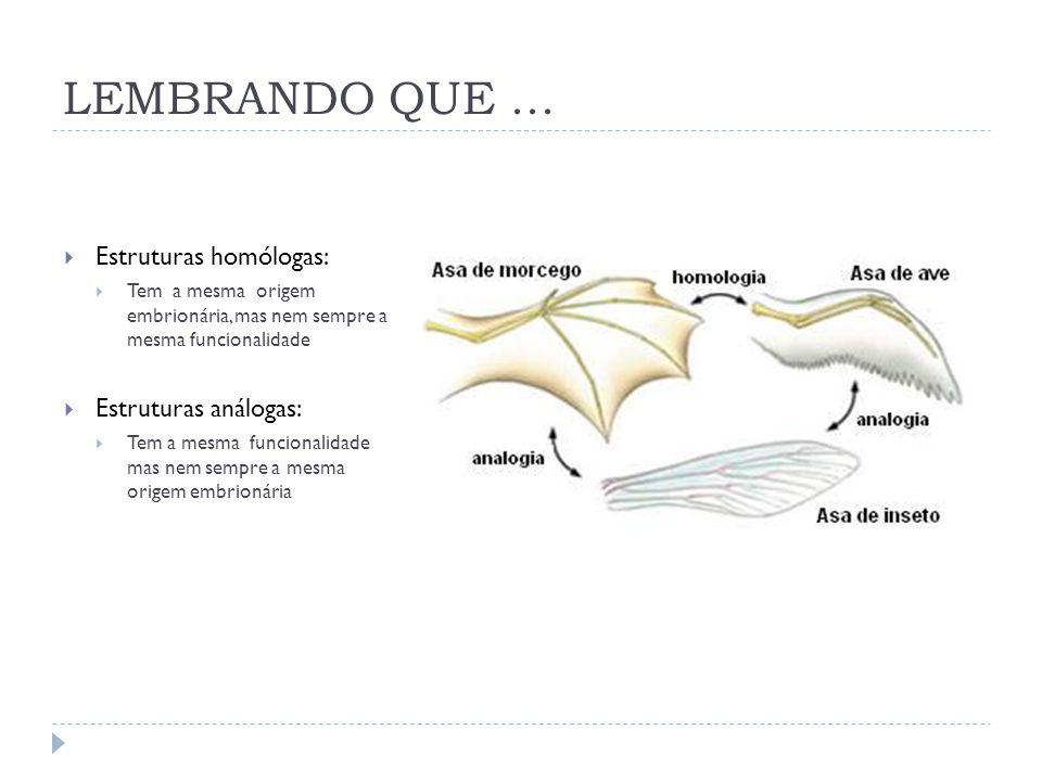 LEMBRANDO QUE...  Estruturas homólogas:  Tem a mesma origem embrionária, mas nem sempre a mesma funcionalidade  Estruturas análogas:  Tem a mesma
