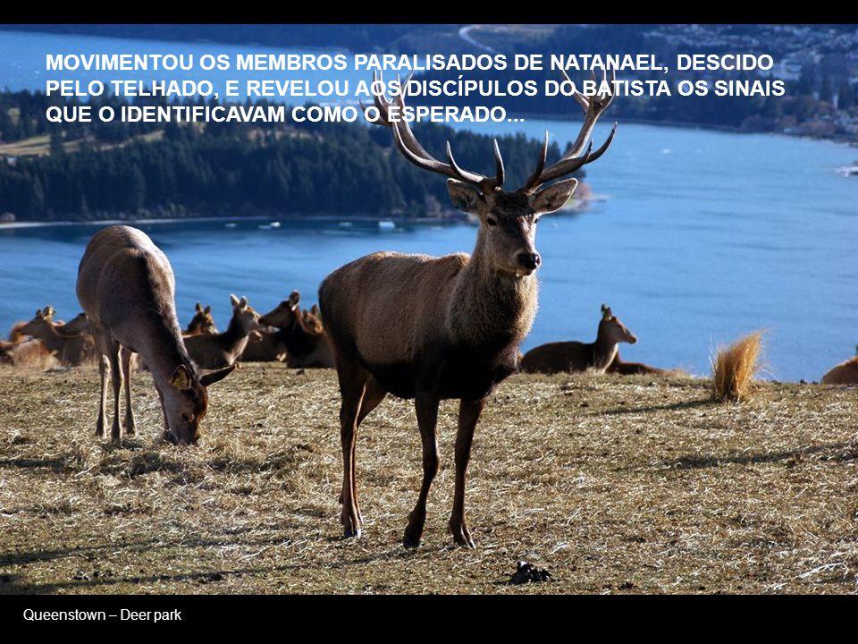 Queenstown – Deer park REVELOU A BOA NOVA AOS SÁBIOS DE JERUSALÉM QUE A ESCUTARAM DESLUMBRADOS E, À ÚLTIMA HORA, ENSINOU AOS MALSINADOS LADRÕES, COMPA