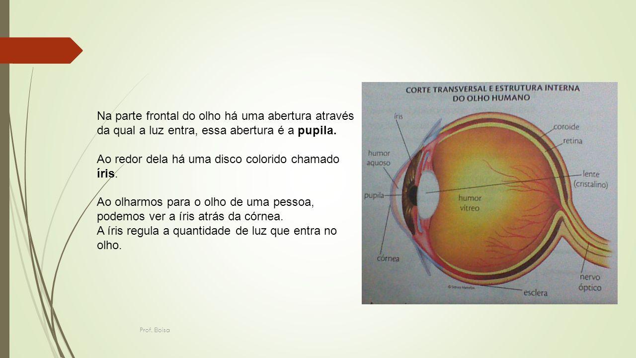 Na parte frontal do olho há uma abertura através da qual a luz entra, essa abertura é a pupila. Ao redor dela há uma disco colorido chamado íris. Ao o