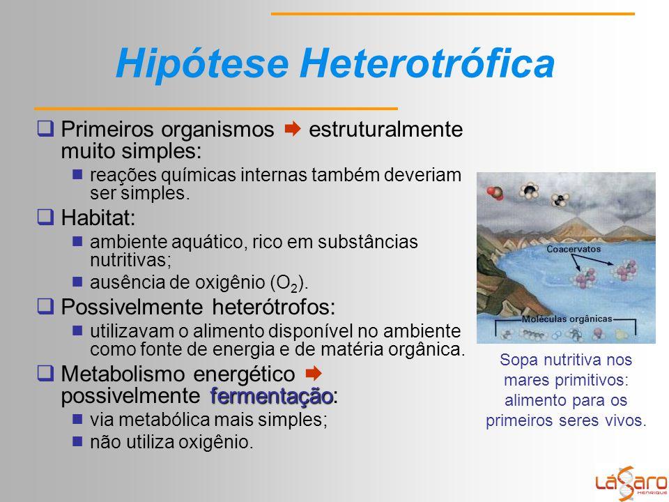 Hipótese Heterotrófica  Primeiros organismos  estruturalmente muito simples:  reações químicas internas também deveriam ser simples.