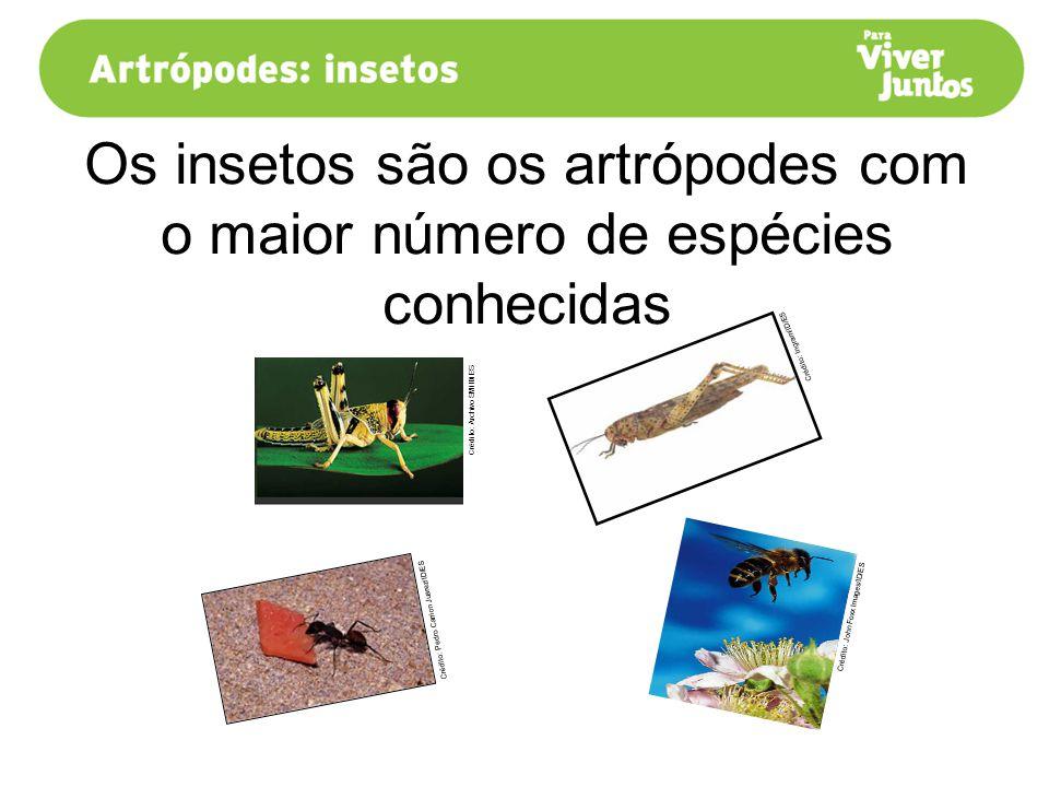 Os insetos são os artrópodes com o maior número de espécies conhecidas Crédito: Ingram/ID/ES Crédito: Pedro Carrion Juarez/ID/ES Crédito: Archivo SM/I