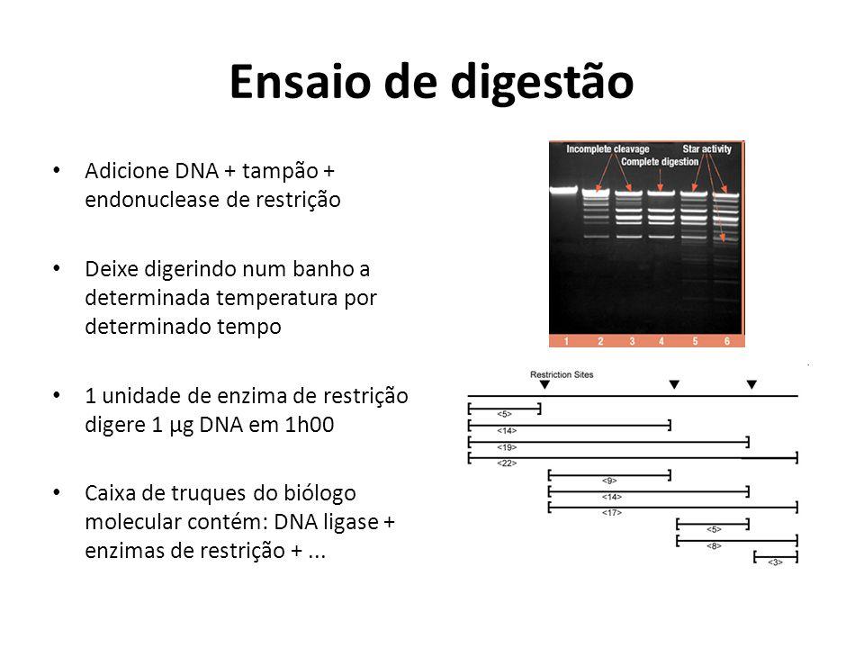 Ensaio de digestão Adicione DNA + tampão + endonuclease de restrição Deixe digerindo num banho a determinada temperatura por determinado tempo 1 unida