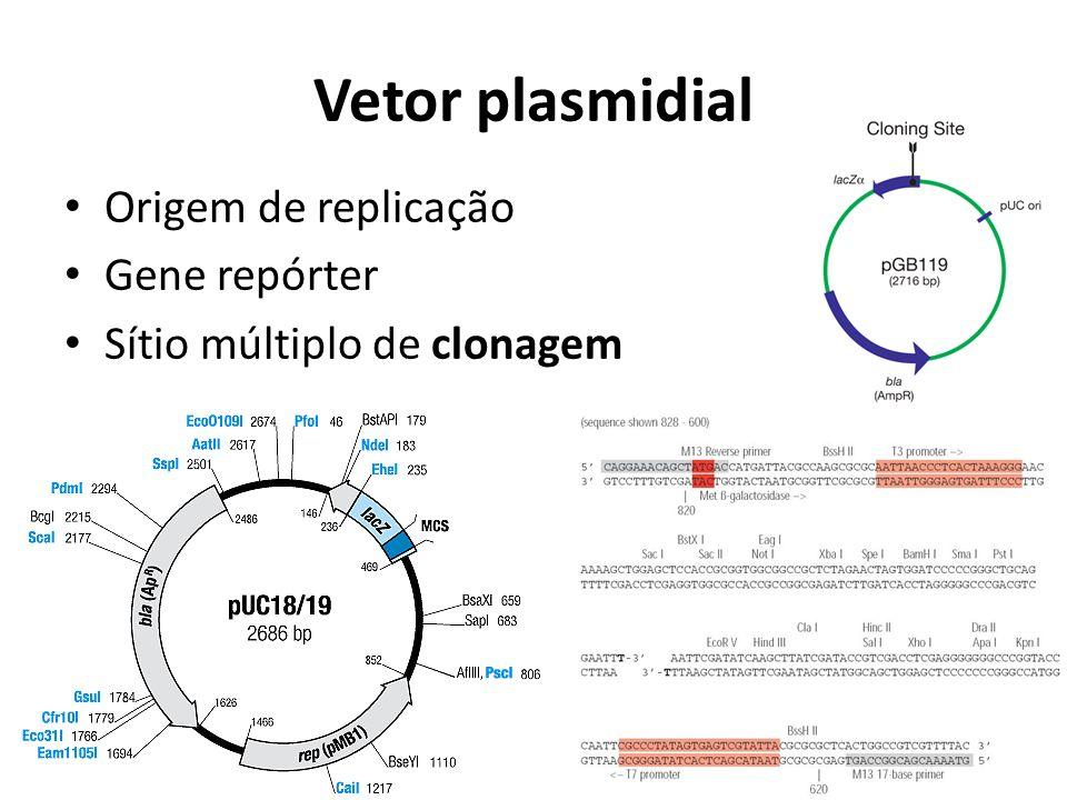 Vetor plasmidial Origem de replicação Gene repórter Sítio múltiplo de clonagem
