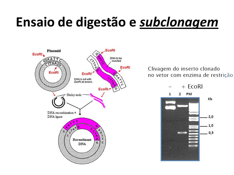 Ensaio de digestão e subclonagem Kb 1 2 PM 0,5 1,0 2,0 Clivagem do inserto clonado no vetor com enzima de restrição - + EcoRI