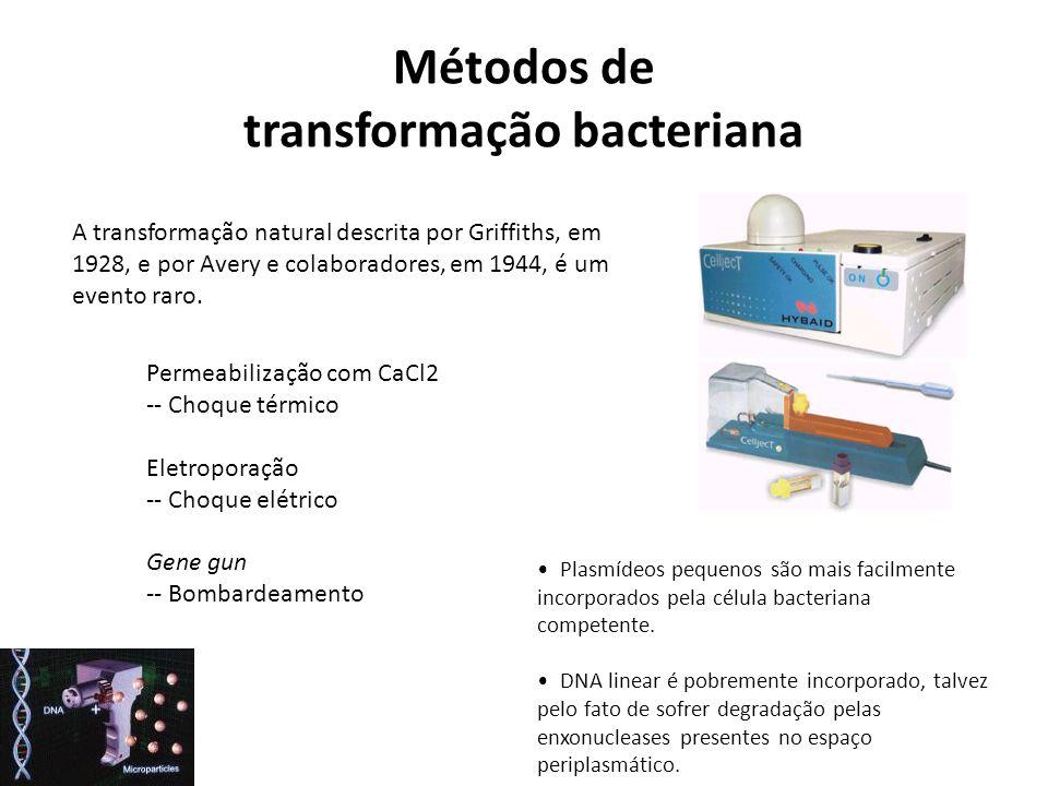 Métodos de transformação bacteriana A transformação natural descrita por Griffiths, em 1928, e por Avery e colaboradores, em 1944, é um evento raro. P