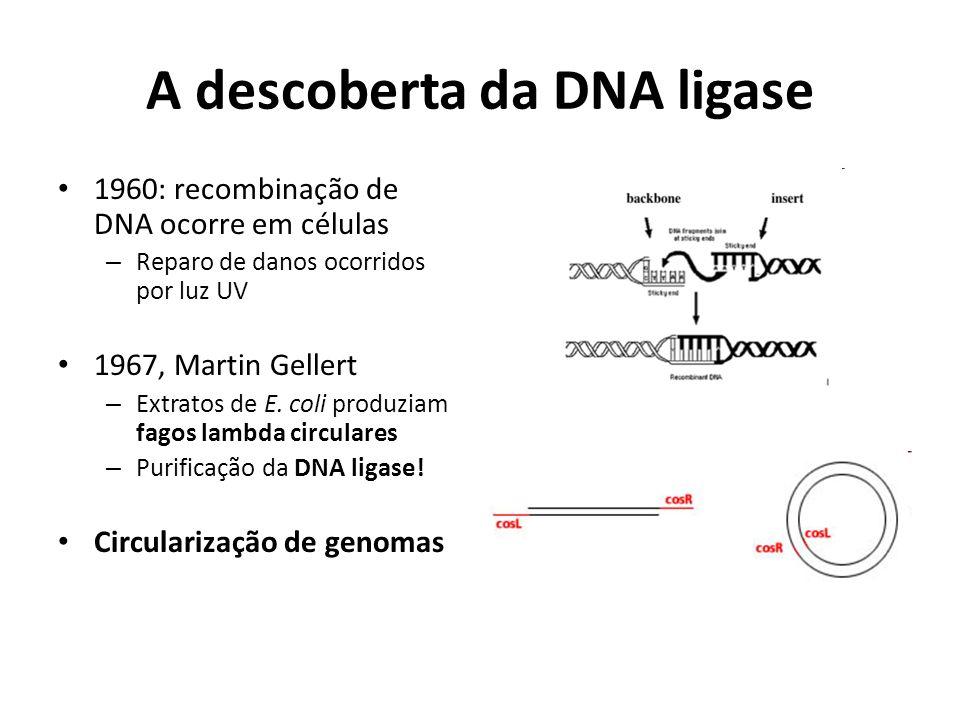 A descoberta da DNA ligase 1960: recombinação de DNA ocorre em células – Reparo de danos ocorridos por luz UV 1967, Martin Gellert – Extratos de E. co