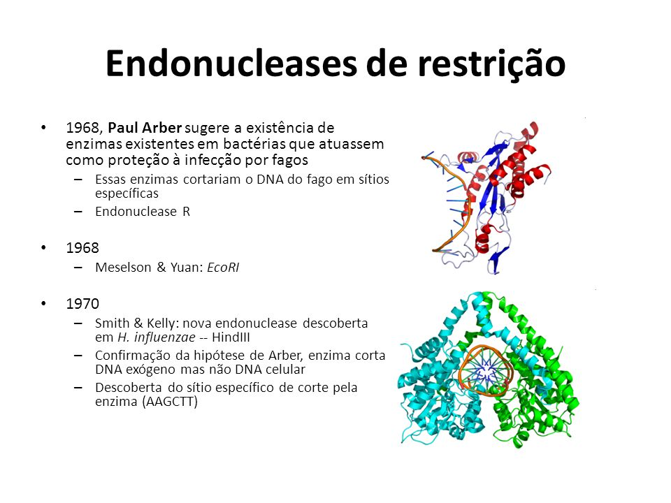 Endonucleases de restrição 1968, Paul Arber sugere a existência de enzimas existentes em bactérias que atuassem como proteção à infecção por fagos – E