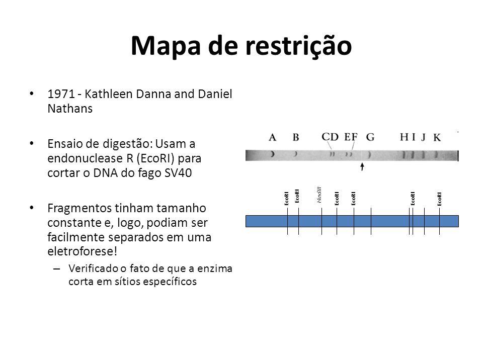 Mapa de restrição 1971 - Kathleen Danna and Daniel Nathans Ensaio de digestão: Usam a endonuclease R (EcoRI) para cortar o DNA do fago SV40 Fragmentos