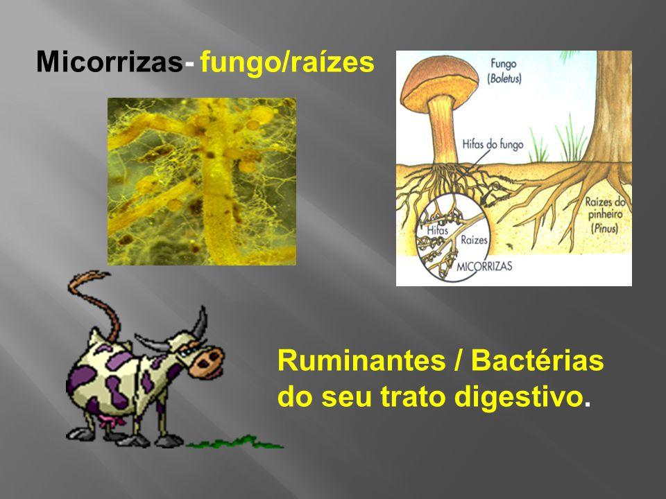 Ruminantes / Bactérias do seu trato digestivo. Micorrizas- fungo/raízes