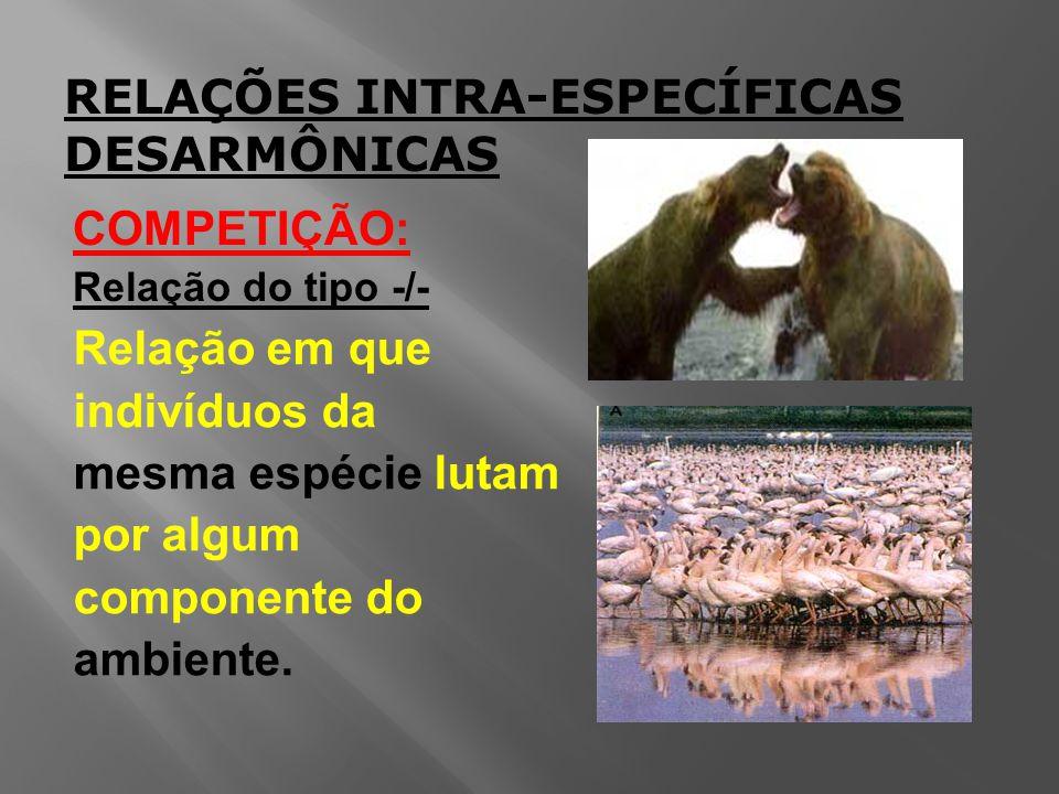 RELAÇÕES INTRA-ESPECÍFICAS DESARMÔNICAS COMPETIÇÃO: Relação do tipo -/- Relação em que indivíduos da mesma espécie lutam por algum componente do ambiente.