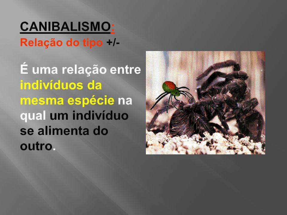 É uma relação entre indivíduos da mesma espécie na qual um indivíduo se alimenta do outro.