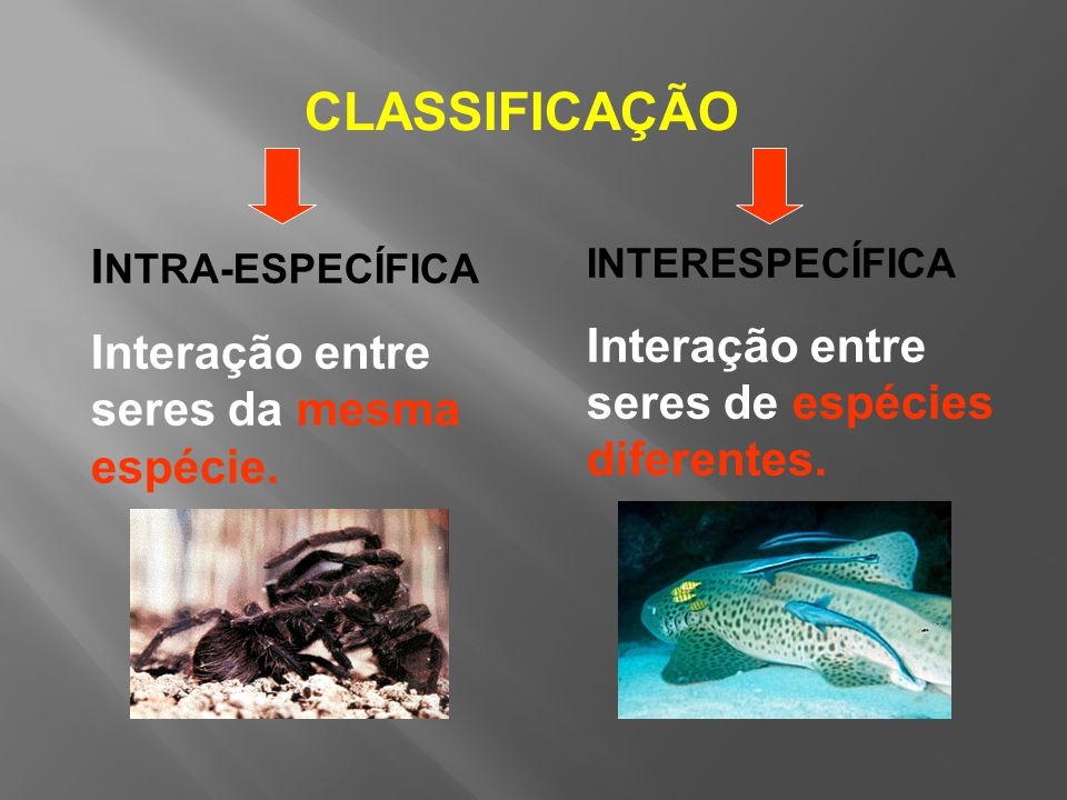 INTERESPECÍFICA Interação entre seres de espécies diferentes.