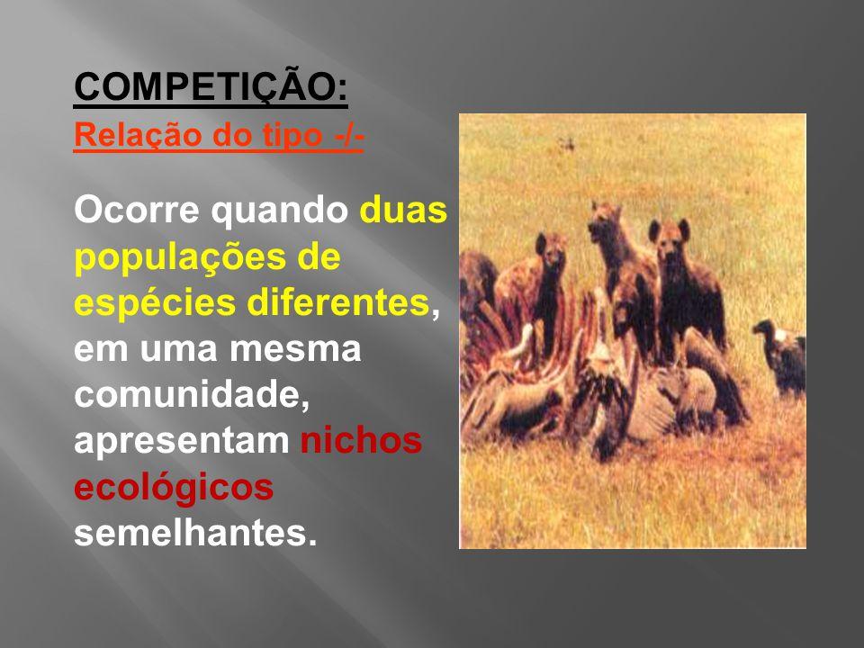 COMPETIÇÃO: Relação do tipo -/- Ocorre quando duas populações de espécies diferentes, em uma mesma comunidade, apresentam nichos ecológicos semelhantes.
