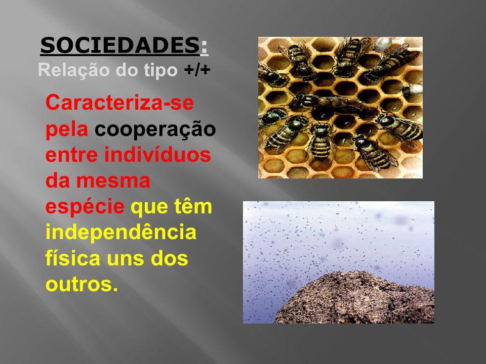 Caracteriza-se pela cooperação entre indivíduos da mesma espécie que têm independência física uns dos outros.