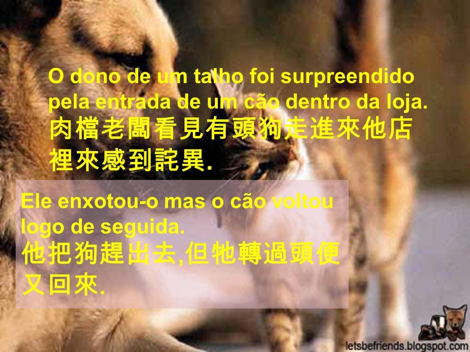 O dono de um talho foi surpreendido pela entrada de um cão dentro da loja.