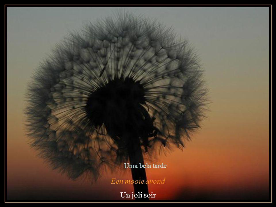 Een mooie avond Un joli soir Uma bela tarde