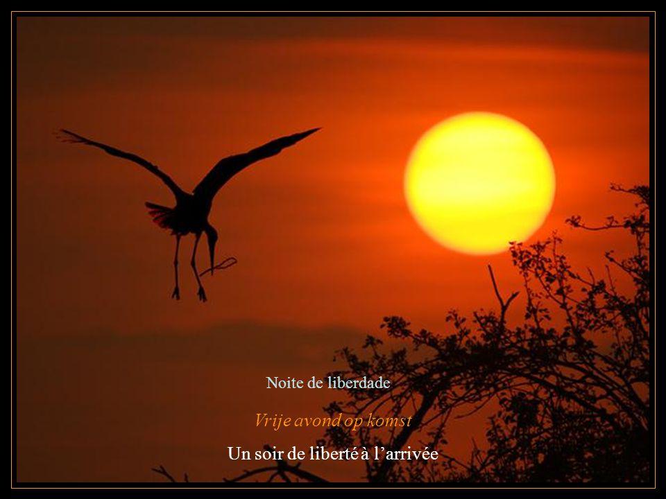 Vrije avond op komst Un soir de liberté à l'arrivée Noite de liberdade