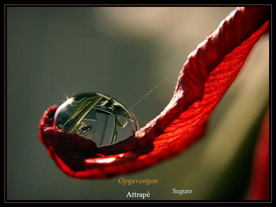 Opgevangen Attrapé Seguro