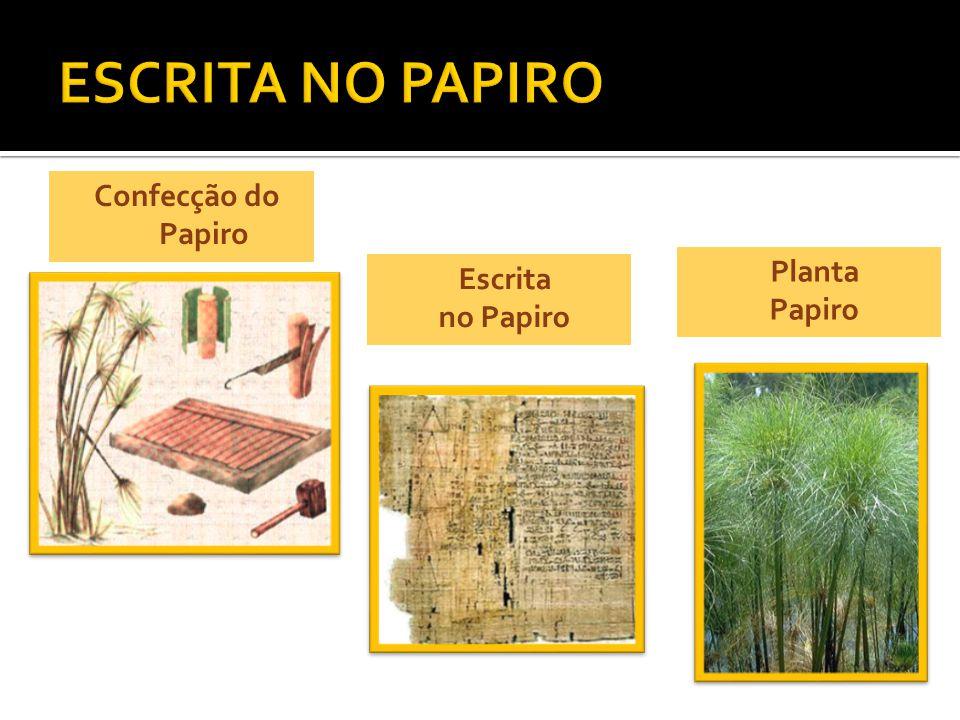 Confecção do Papiro Escrita no Papiro Planta Papiro