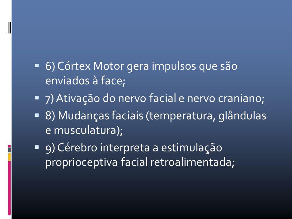  6) Córtex Motor gera impulsos que são enviados à face;  7) Ativação do nervo facial e nervo craniano;  8) Mudanças faciais (temperatura, glândulas