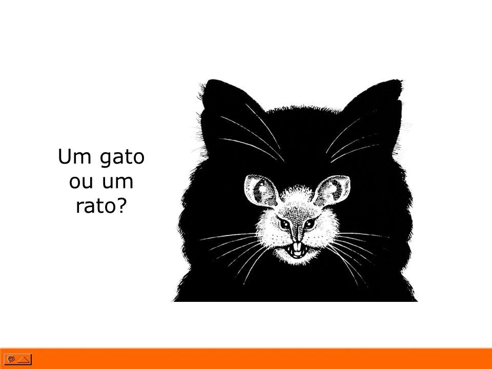 Um gato ou um rato?