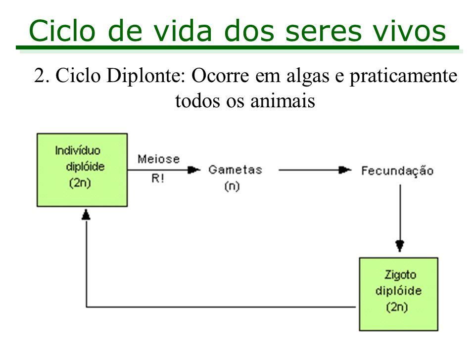 Ciclo de vida dos seres vivos 2. Ciclo Diplonte: Ocorre em algas e praticamente todos os animais