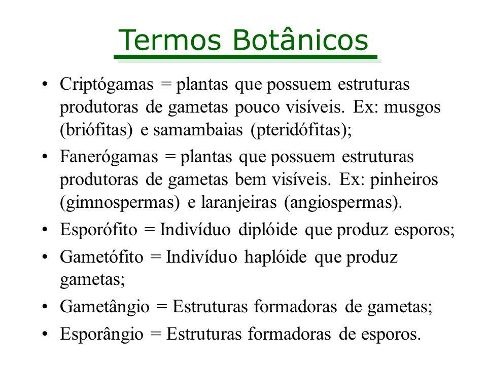 Termos Botânicos Criptógamas = plantas que possuem estruturas produtoras de gametas pouco visíveis. Ex: musgos (briófitas) e samambaias (pteridófitas)