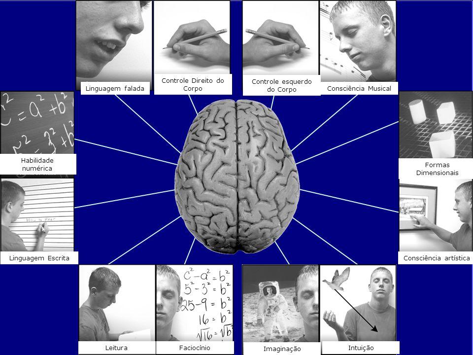 Linguagem falada Controle Direito do Corpo Controle esquerdo do Corpo Consciência Musical Habilidade numérica Linguagem Escrita LeituraFaciocínio Imag