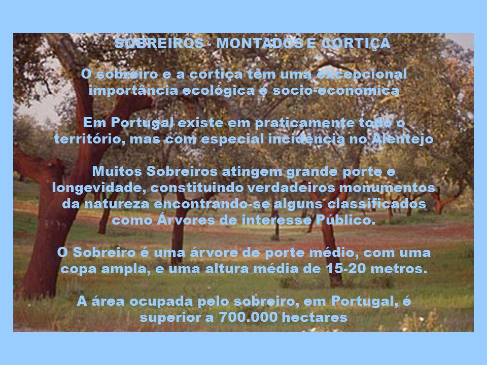 O campo de golfe d Ammaia encontra-se localizado na área do parque natural da Serra de São Mamede, onde sobressai a antiga vila de Marvão, situada a uma altitude de 862 metros.