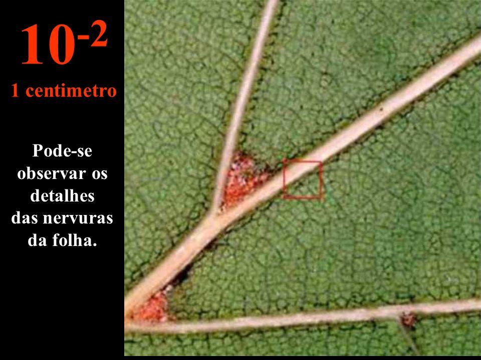 É uma folha de carvalho. 10 -1 10 centimetros