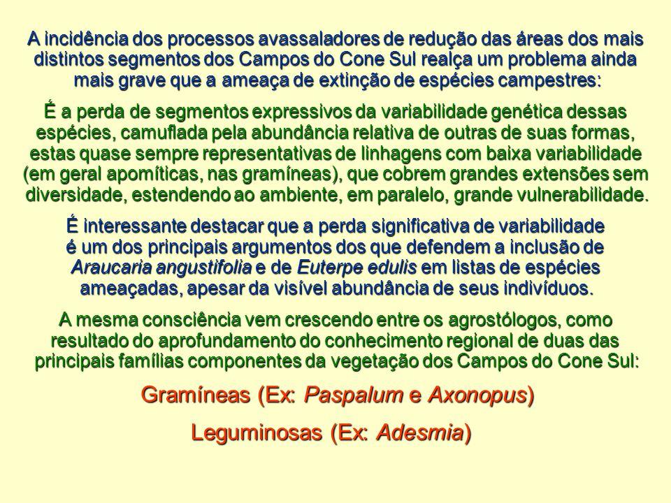 A incidência dos processos avassaladores de redução das áreas dos mais distintos segmentos dos Campos do Cone Sul realça um problema ainda mais grave