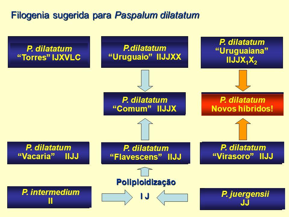"P. dilatatum ""Uruguaiana"" IIJJX 1 X 2 P.dilatatum ""Uruguaio"" IIJJXX P. dilatatum ""Torres"" IJXVLC P. dilatatum ""Comum"" IIJJX P. dilatatum ""Vacaria"" IIJ"