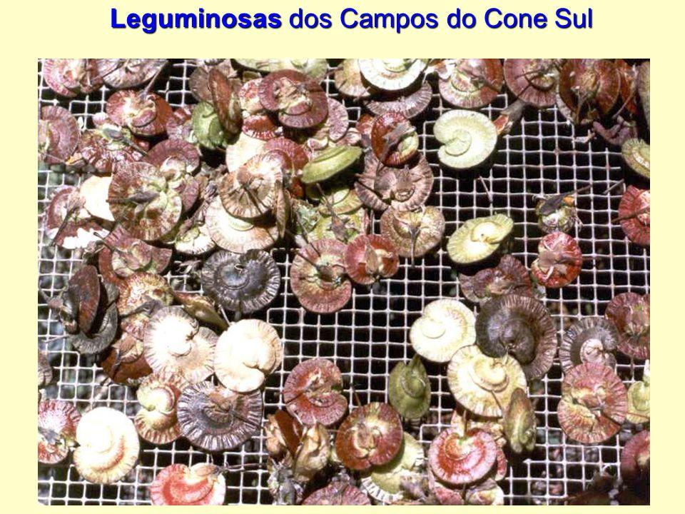 Leguminosas dos Campos do Cone Sul