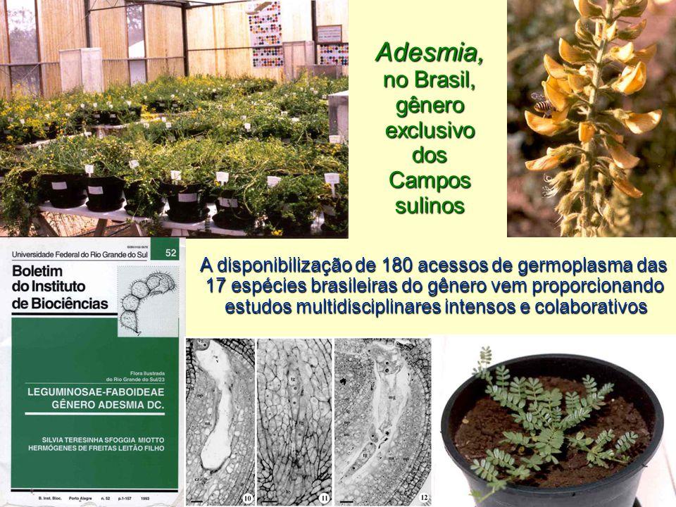 Adesmia, no Brasil, gêneroexclusivo dos Campos sulinos A disponibilização de 180 acessos de germoplasma das 17 espécies brasileiras do gênero vem proporcionando estudos multidisciplinares intensos e colaborativos