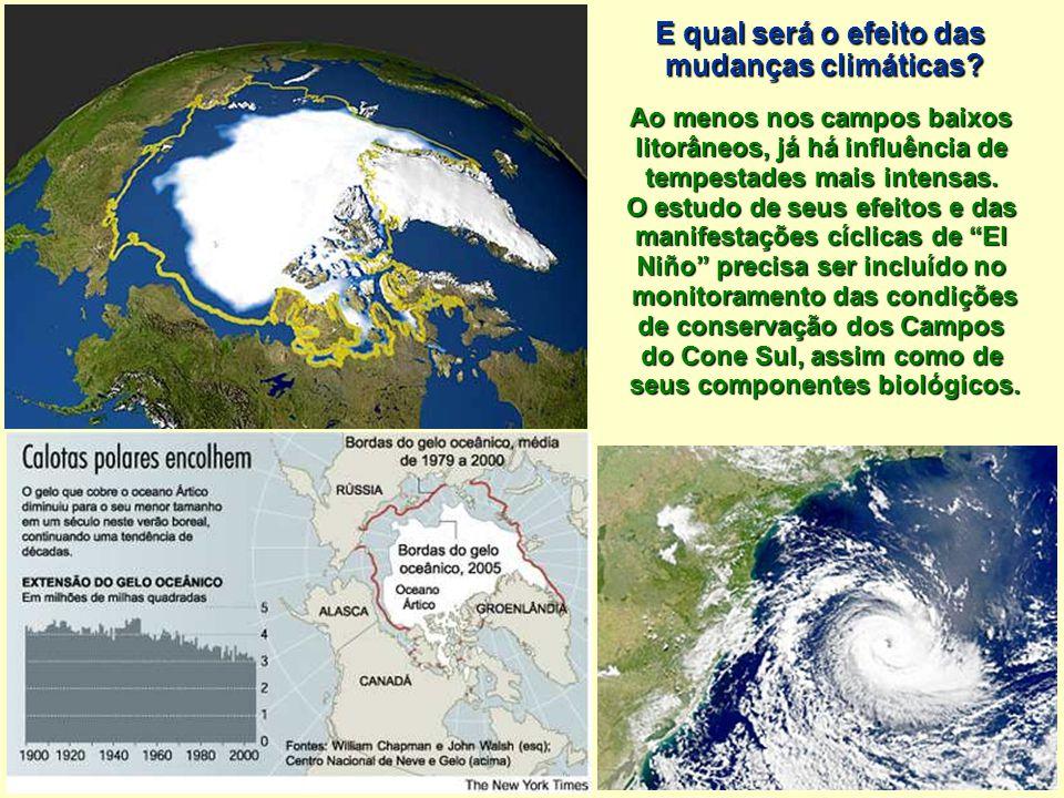 E qual será o efeito das mudanças climáticas? Ao menos nos campos baixos litorâneos, já há influência de tempestades mais intensas. O estudo de seus e