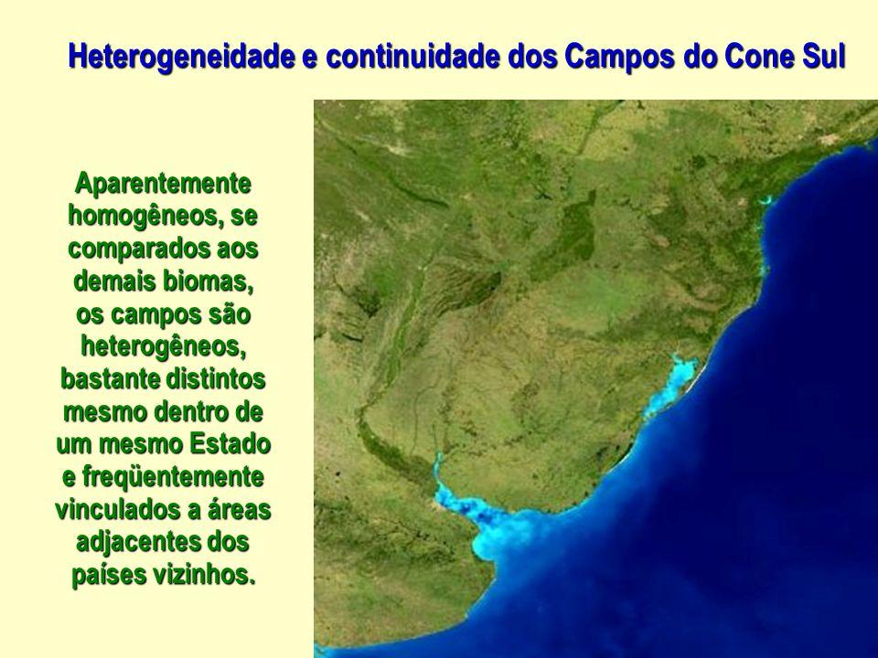 Adesmia, no Brasil, gêneroexclusivo dos Campos sulinos