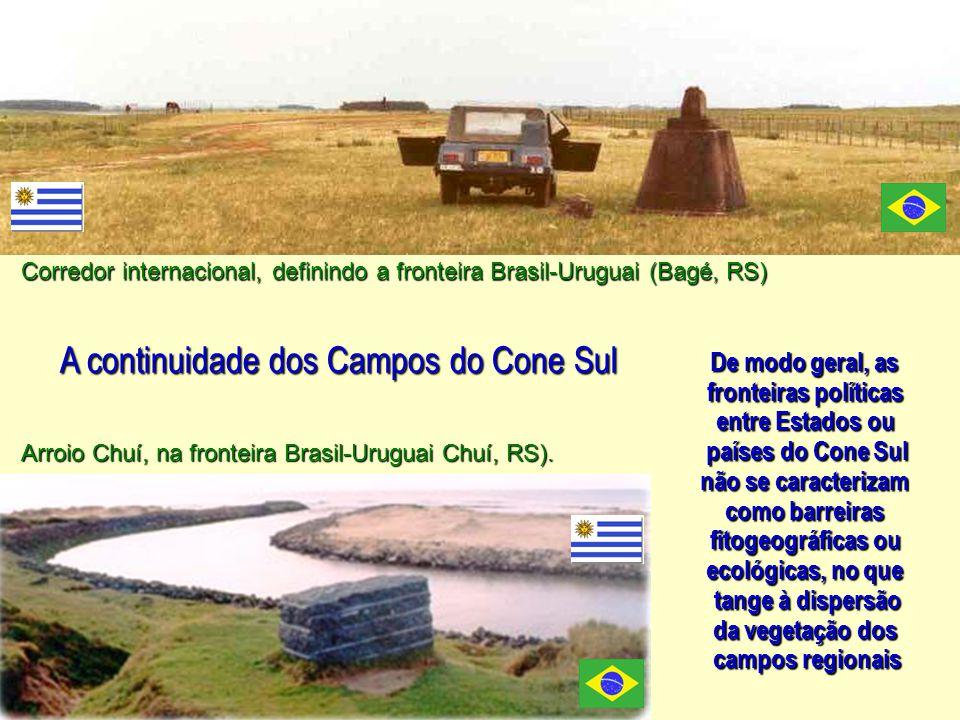 A continuidade dos Campos do Cone Sul De modo geral, as fronteiras políticas entre Estados ou países do Cone Sul não se caracterizam como barreiras fitogeográficas ou ecológicas, no que tange à dispersão da vegetação dos campos regionais Corredor internacional, definindo a fronteira Brasil-Uruguai (Bagé, RS) Arroio Chuí, na fronteira Brasil-Uruguai Chuí, RS).