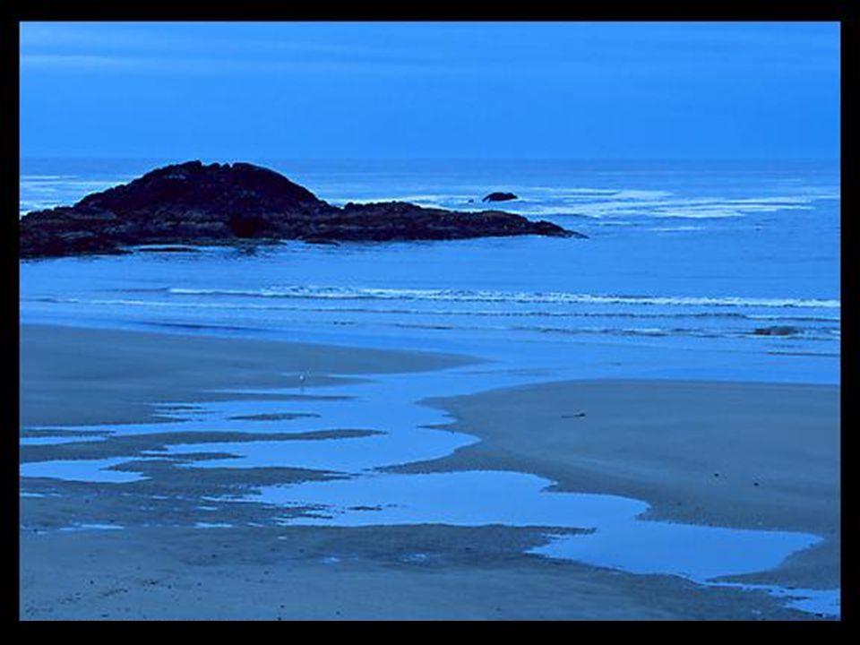 Obrigado pela floresta, pelo seu silêncio, ela enleia a minha alma. Obrigado pela água do mar, os seus reflexos, as suas vagas, os seus murmúrios.