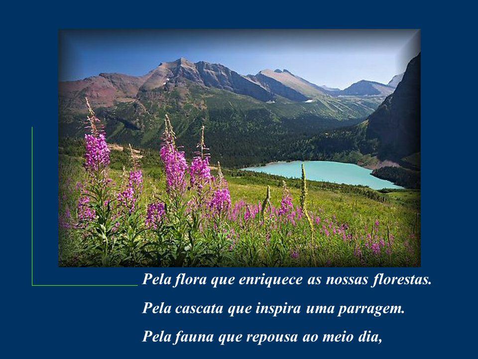 Pela flora que enriquece as nossas florestas.Pela cascata que inspira uma parragem.