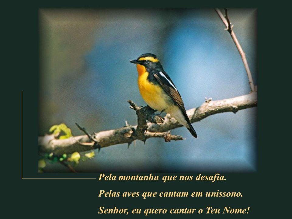 Pela montanha que nos desafia.Pelas aves que cantam em unissono.