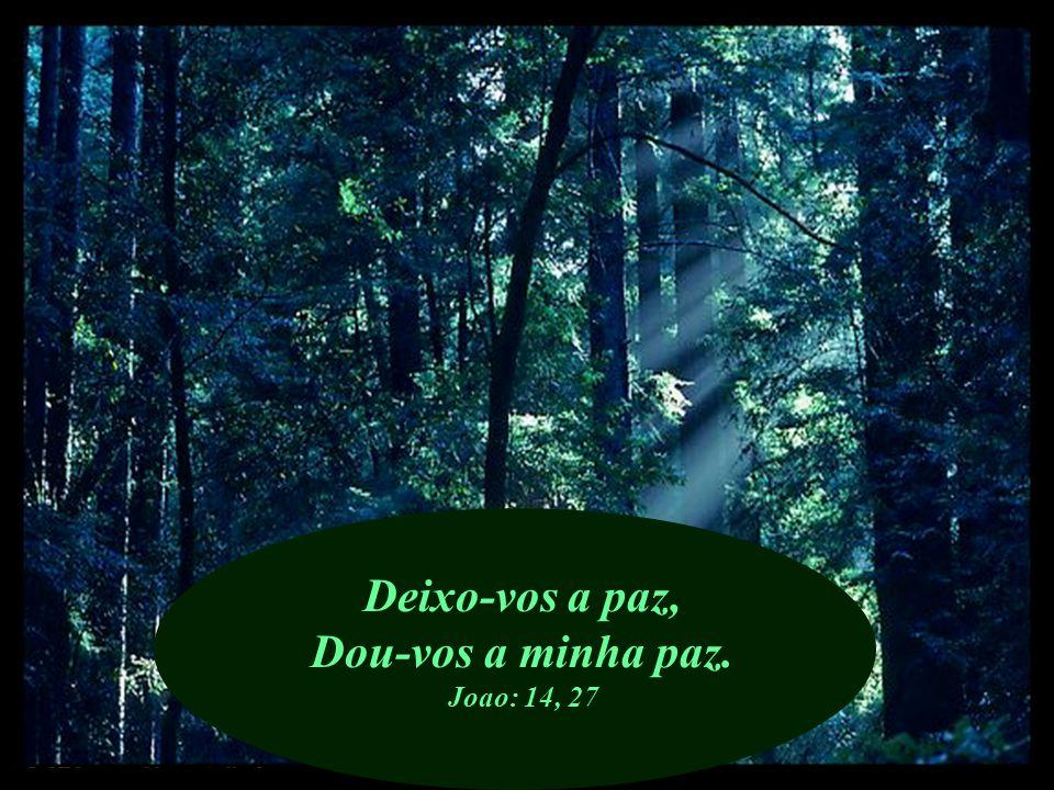 O Senhor, Ele mesmo, dará a felicidade. Salmo: 85, 13