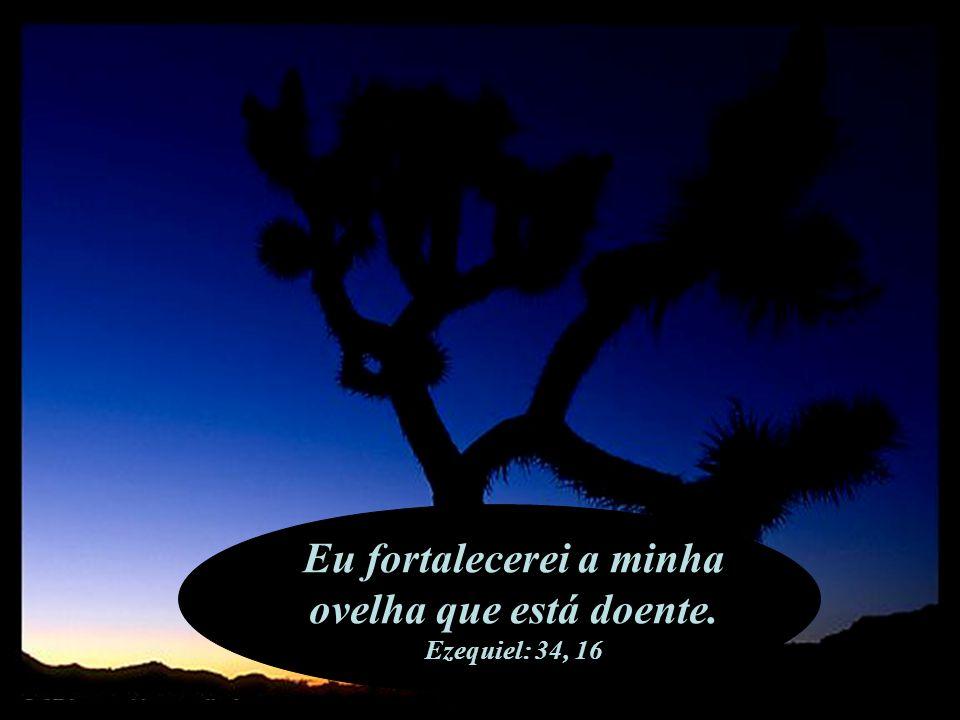 Ele orou a Deus que o libertou. 2 Crónicas: 32, 24