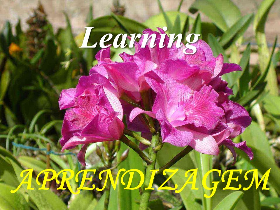 APRENDIZAGEM Learning